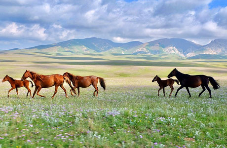 Kirgistan. Pferde in den Bergen am Song Kul Lake. Juli 2017.