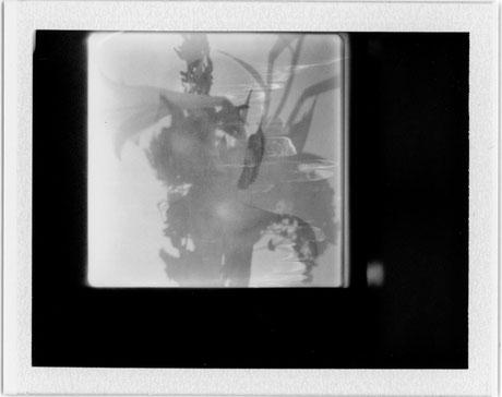 Sahasrara | 2017| Polaroid