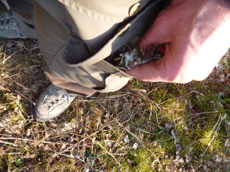 Zundermaterial aus Birke, Birke als Survivalbaum, Birkenrinde nutzen, Birkenrinde zum Feurmachen nutzen.