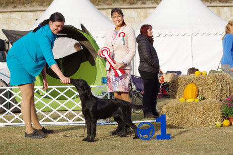 ZARA BEST IN SHOW MINOR PUPPY
