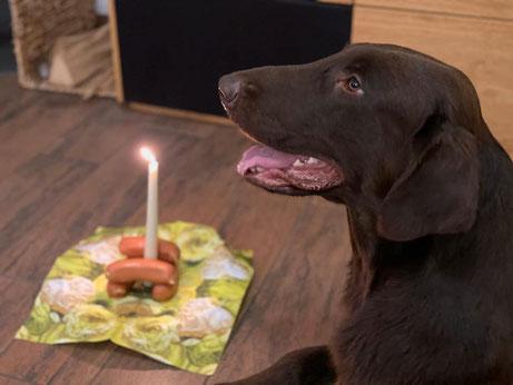 Happy Birthday Neill!