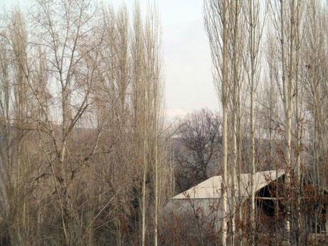 poplars at remote village in Kyrgyzstan
