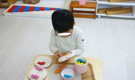 幼児教室の幼稚園児クラスで、生徒がモンテッソーリの活動に集中して取り組んでいます。
