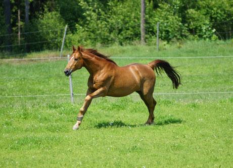 "Das Pferd ""Beryl""im Sommer 2012."