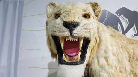 ホラアナライオンのイメージ像。