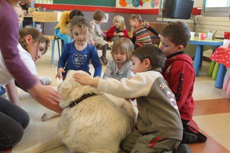 berger blanc suisse bbs enfant ado alsh la boissiere atelier ecole