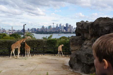 "Der Taronga Zoo mit der ""A million dollar view"""