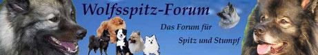 Wolfsspitz Forum