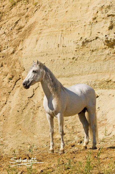 Scheytt Photography - Individuelle Pferdefotografie