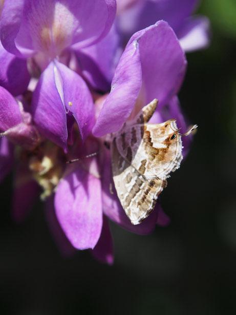 Butterfly, Santa Isabel, Toledo  2013