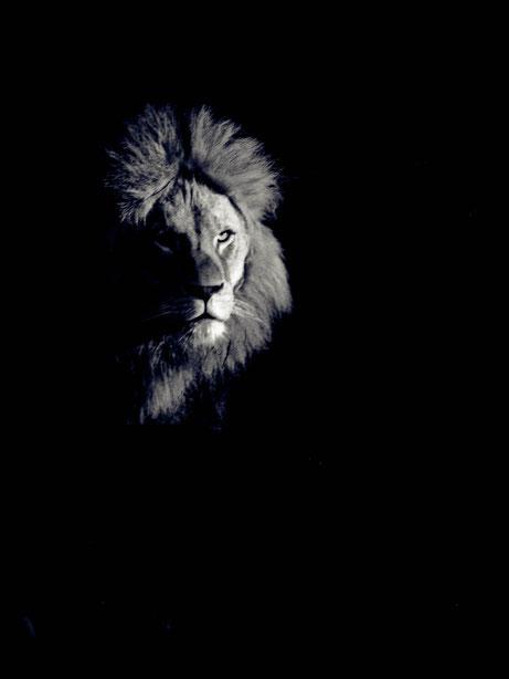 Löwenschatten
