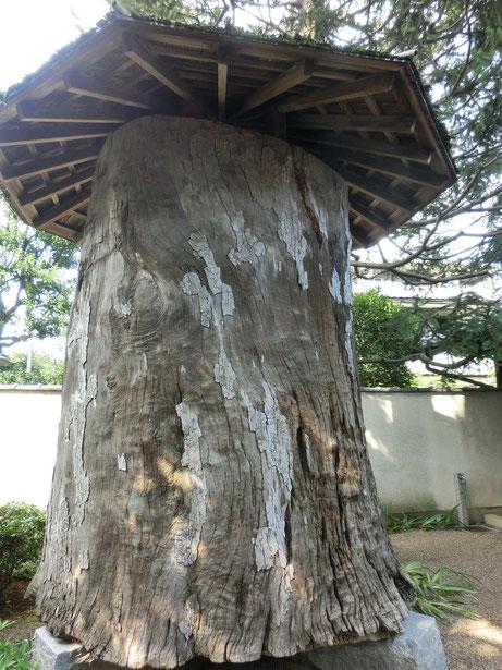 7月19日(2016) 彫刻用原木(クスノキ):7月18日、小平市の平櫛田中彫刻美術館のつぼ庭にて。日本近代彫刻界の巨匠故平櫛田中が百歳になってから彫刻用の原木として用意され、庭の一角に乾燥のため寝かせてあったもののひとつ。樹齢推定500年、直径約1.9メートル、重量約5.5トン。クスノキは色調が複雑で独特の味わいと芳香があり、古くから仏像や面などに使用されてきたことがガイド表示に書いてありました