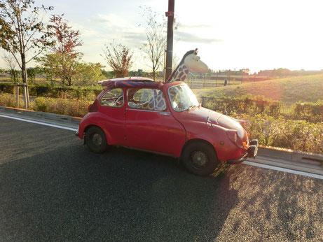 ●武蔵野の森公園を横切る道で出会ったキリンです。人形なのですが、車に乗っているのでビックリしました。