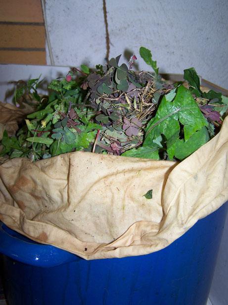 Experiment : diesmal wird mit Pflanzenteilen gefärbt die beim Unkraut jäten angefallen sind