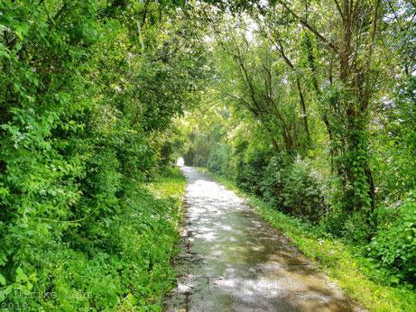 Spaziergang entlang des Ufers der Förde in Laboe