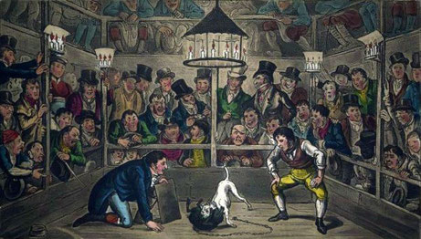Tom and Jerry sporting their Blunt on the phenomenon monkey Jacco Macacco at the Westminster Pit (1821) by George and Isaac Robert Cruikshank