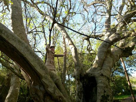 アフリカンツリー太古の森のミスト 光の木 ホワイトスティンクウッド