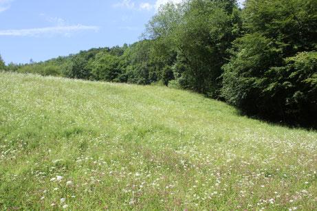Springe entdeckt seine Wildbienen, Skihang - Foto: NABU/F. Gade, J. Grabow-Klucken