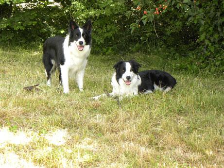 Fleck und Kavik im Alter von ca. 3,5 Jahren (Foto: 19.6.2014)