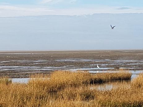 Baie de Somme - mer - plage - gîte - location - Picardie - le Crotoy - weekend - vacance - phoque - randonnée - appartement 4 personnes - nature - détente - séjour vélo - Henson - marquenterre - Saint Valéry - Balcon - oiseau - famille - pêche - Kayak