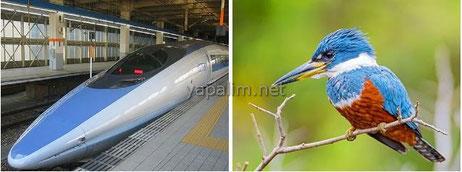 Balıkçıl Kuşlar ve Hızlı Tren