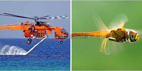 Yusufçuk Böceği ve Helikopter