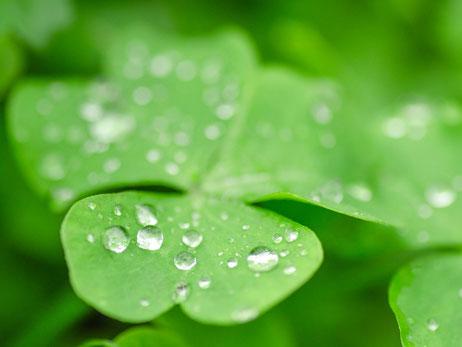 緑と雨の雫が似合う季節が待ち遠しいね