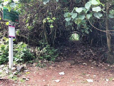 Hiking Raemaru, Raemaru Rarotonga, Raemaru track, Start of Raemaru hoke,