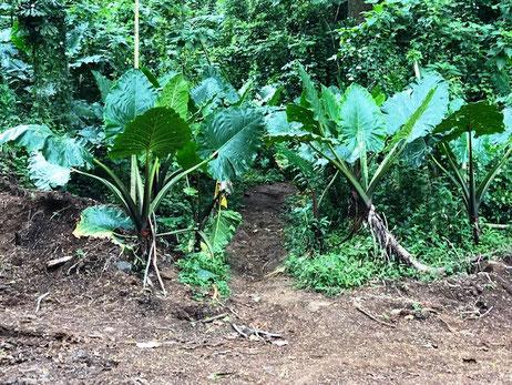 Raemaru Rarotonga, Hiking Raemaru,