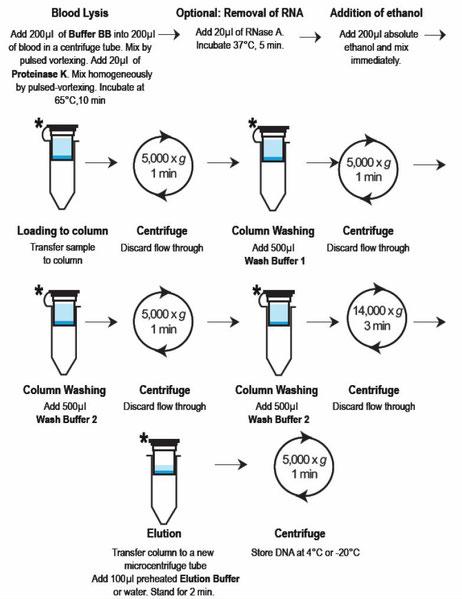 DNA Aufreinigungs miniprep Kit: Vollblut