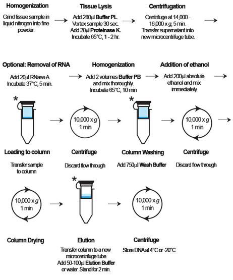 DNA Aufreinigung pflanzlicher DNA aus Blut
