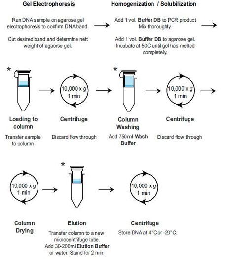 Aufreinigung von Agarose Gelen und PCR Produkte