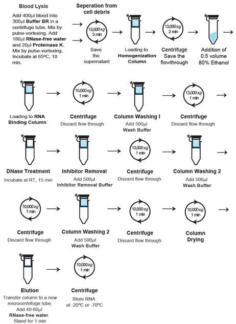 Miniprepkit von RNA aus Blut