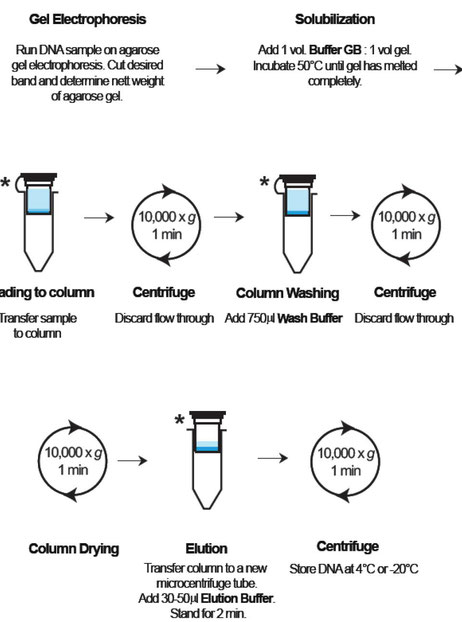 Extraktion von DNA aus Gel und Agarose