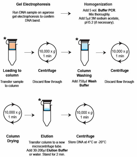 Aufreinigung von PCR-Produkten aus Agarosegelen