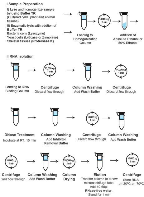 Extraktion aus Gesamt-RNA aus Zellen und anderem Gewebe