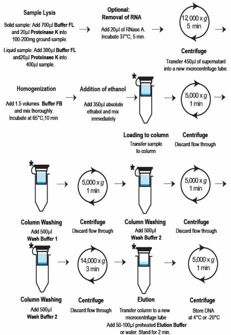 DNA in Lebensmittel: Aufreinigungskit