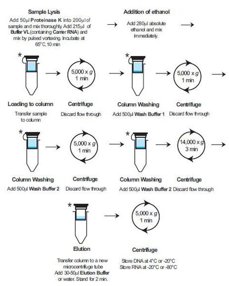 Virale DNA oder RNA: Extraktionskit