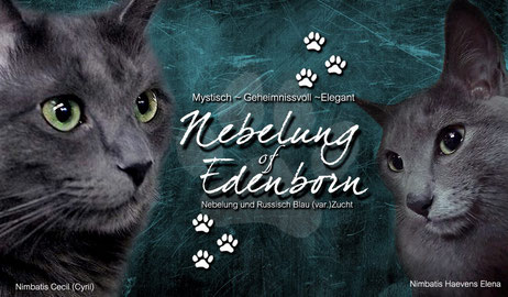 Nebelung of Edenborn