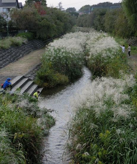 10月11日(2014) 野川の秋:小金井新橋の上から