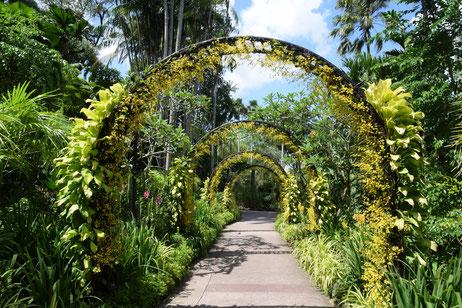 Angelegt Gärten der Superlative in Singapur