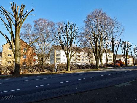 Jahnstrasse - Baumschnitt