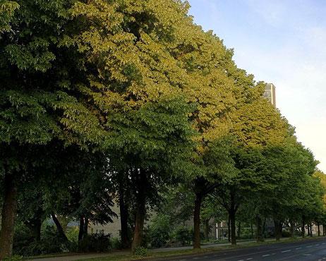 Jahnstrasse Laubbäume