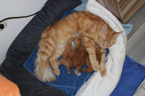 A Wurf 2019 Heidi's ersten Babys