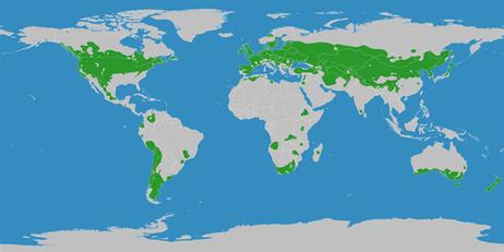 Klimagürtel der Erde - warm-gemäßigte Zonen