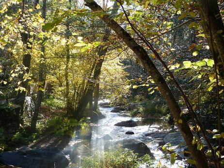 rivière et cascades au moulin à papier de brousses et villaret dans l'Aude