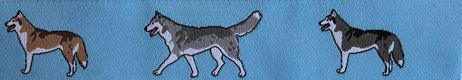 Siberian Husky hellblau