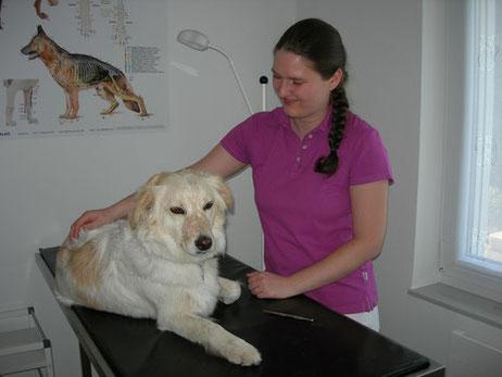 Susanne Kürner bei der Behandlung eines Hundes in ihrer Tierheilpraxis mit Herz in Tübingen