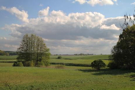 Landschaft zwischen Trampe und Hammelstall