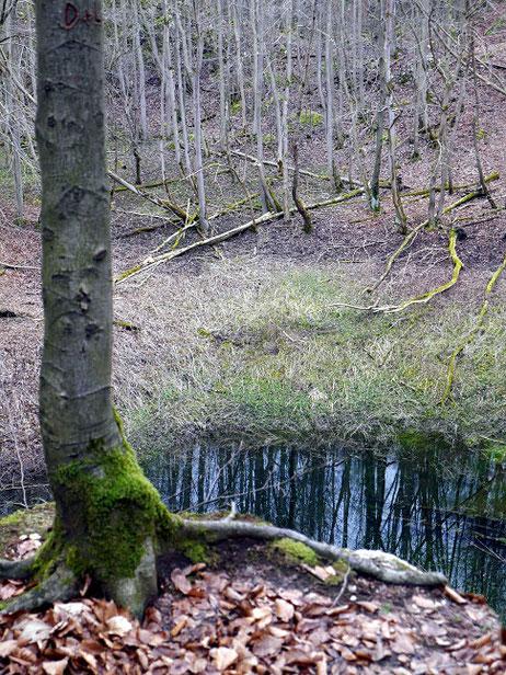 tiefes Wasserloch im Hainholz